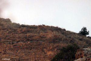 Fall Tandoureh