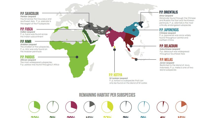 Global status of leopard