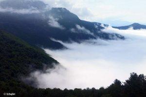 Hirkanian Forest