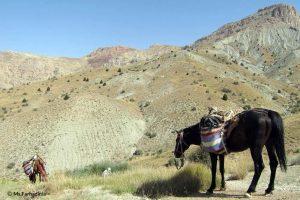Horse in Tandoureh