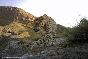 Poor Leopard