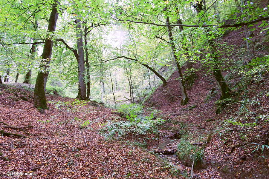 Caspian Hyrcanian mixed forests