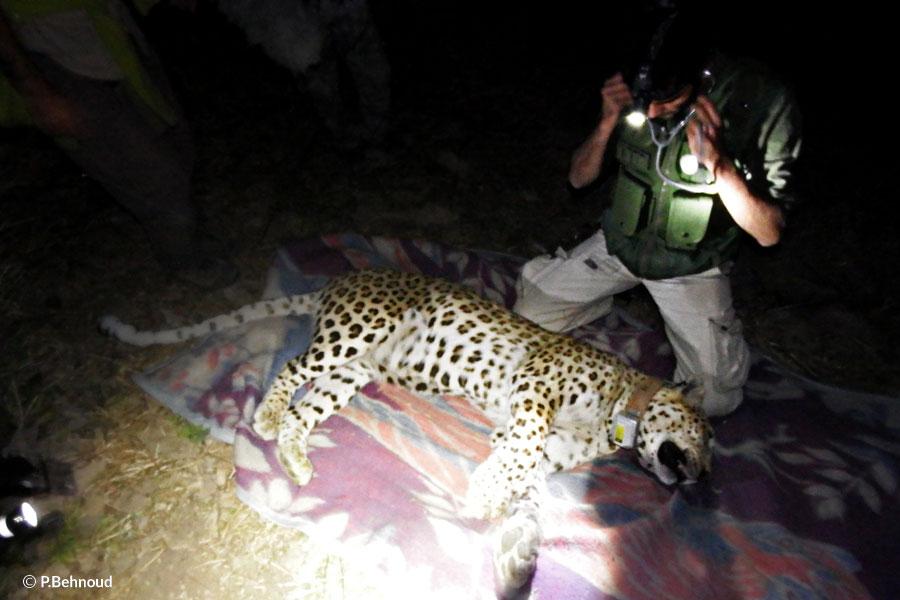 Leopard Operation