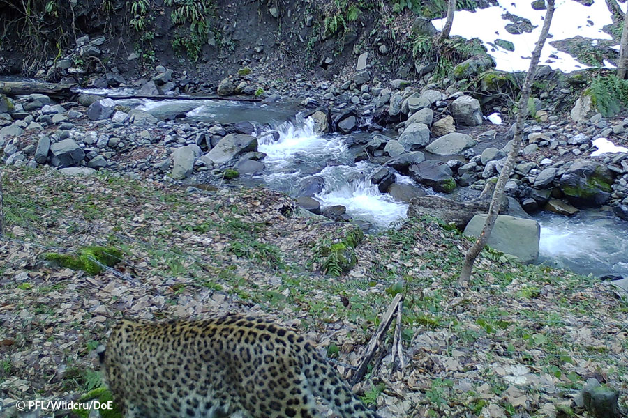 Unexpected leopard images